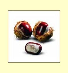 Castaño de Indias - Enemigo número uno de las varices - Artículo Informativo