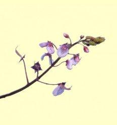Desmodium Planta Cortada - 100 gramos