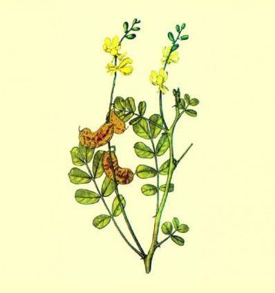 Sen hojas enteras (Cassia angustifolia) - 100 gramos
