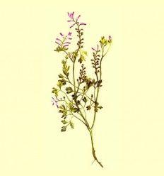 Fumaria planta cortada (Fumaria officinalis) - 100 gramos
