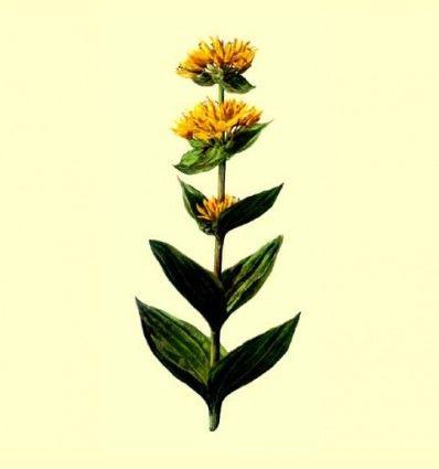 Genciana Raiz Cortada (Gentiana lutea) 100 gr.