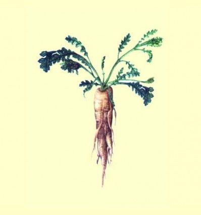 Harpagofito Raiz cortada (Harpagophytum procumbens) - 100 gramos