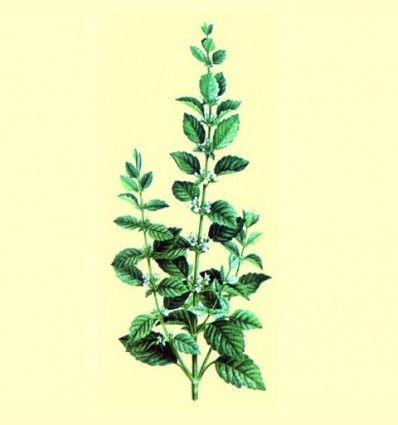Melisa / Torongil en bolsa de 30 gramos