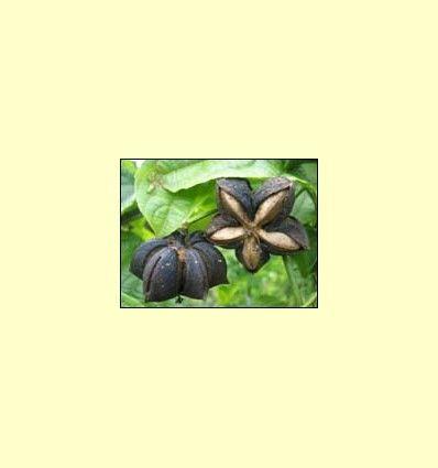 Fuentes Vegetales de Omega 3 - Artículo informativo de Pascual Martínez - Naturópata