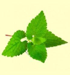 Propiedades antioxidantes y neuroprotectoras de la melisa - Artículo informativo de José Daniel Custodio
