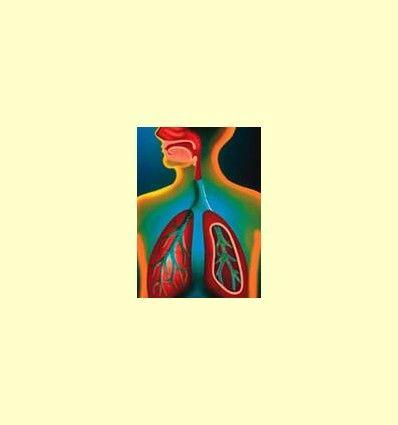 Bromelina y su aplicación en enfermedades respiratorias - Artículo Informativo