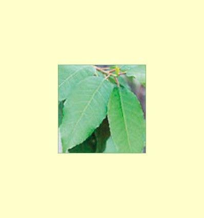Plantas orientadas a mantener la salud de la próstata - Artículo Informativo