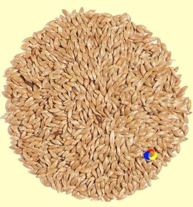 Semillas de Alpiste - Plameca - 1 kg