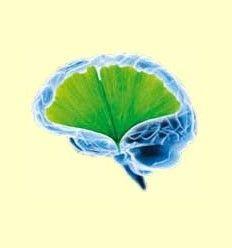 Desórdenes Neurodegenerativos e Insuficiencia Mitocondrial - Información facilitada por Lamberts España