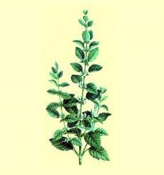 Melisa / Torongil a granel 100 gramos - Hoja extra entera
