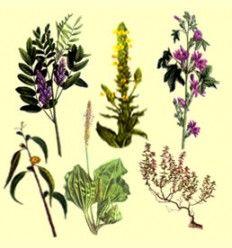 Información Sobre Plantas Medicinales - Listado -