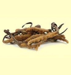 Cordyceps Sinensis - Artículo informativo de Jaume Queral - Naturópata