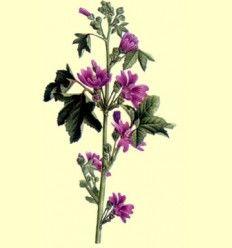 Malva Flor del País Cortada (Malva Silvestris) 100 gramos