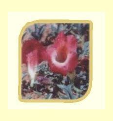 Plantas para combatir problemas oseoarticulares.