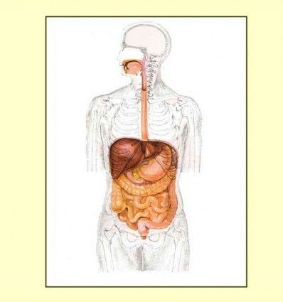 Informacion de las Digestiones Pesadas por Rafael Sáncez - Naturópata -