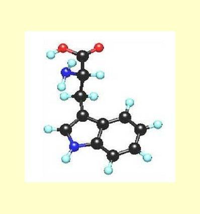 Información del L- triptófano y L-5-hidroxitriptófano (5-HTP) por Mikel García - Director Técnico de Solgar España -