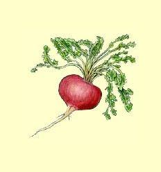 Maca Peruana (Lepidium Meyenii) - Presentada en Polvo - 50 gramos