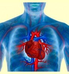 Información sobre problemas Cardíacos - Artículo Informativo por Rafael Sánchez - Naturópata -
