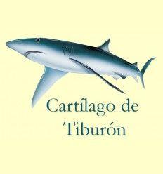 Información del Cartílago de Tiburón
