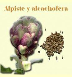 Información sobre el Alpiste y Alcachofera. Evitar exceso de grasas. Artículo Informativo