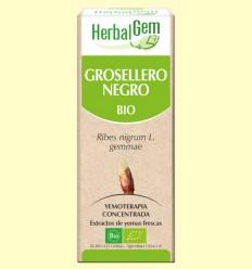 Grosellero Negro Bio - Yemoterapia - HerbalGem - 15 ml