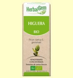 Higuera - Ficus Carica Gemmae Bio - HerbalGem - 15 ml
