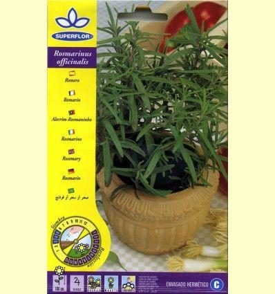 Romero (Rosmarinus Officinalis) - Semillas de Plantas Medicinales y Condimento