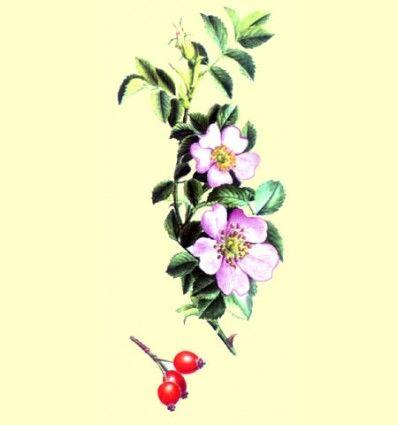 Aceite de Rosa Mosqueta Botella de 500 ml