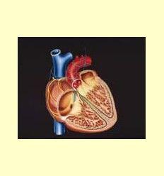 Los Omega 3 presentan efecto cardioprotector y antienvejecimiento - Información facilitada por Lamberts España