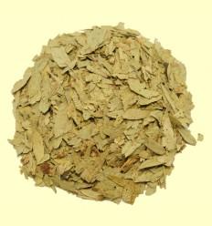 Sen hojas enteras (Cassia angustifolia)