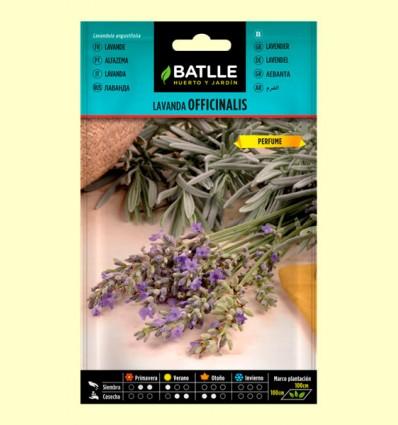 Lavanda Officinalis - Semillas de Plantas Medicinales - Batlle