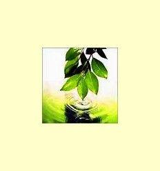 Aromaterapia - Artículo informativo de Jaume Queral - Naturópata