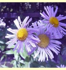 Flores de Bach - Artículo informativo de Jaume Queral - Naturópata