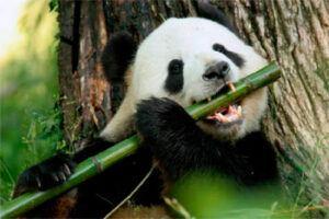 Bambú: Composición y Propiedades