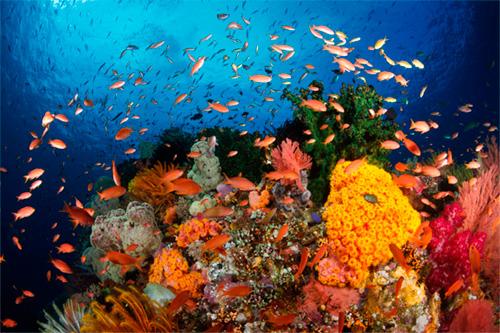 El Coral Calcium de Okinawa
