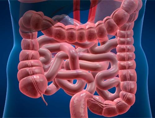 El desequilibrio del aparato digestivo e intestinal