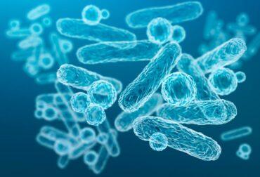 simbioticos propiedades