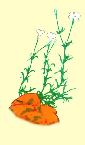 salsufragi.png