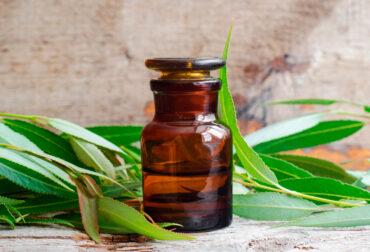 propiedades medicinales del sauce