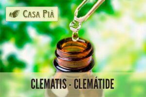 Clematis o Clemátide: Flores de Bach