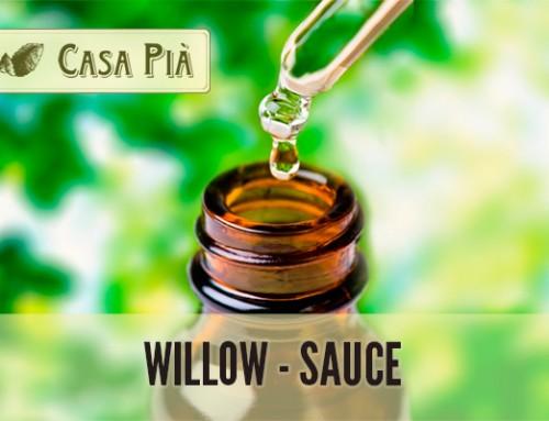 Willow – Sauce