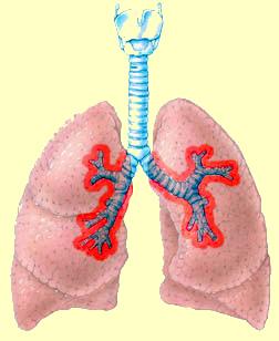 asma1.jpg