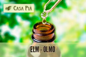 elixires florales Elm - Olmo