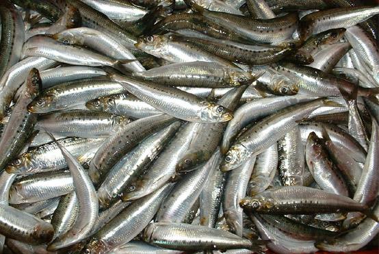 receta-sardinas-escabeche