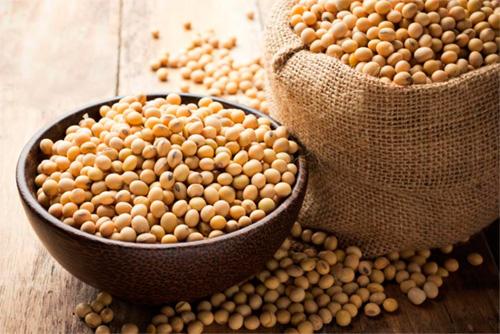 soja semillas