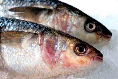 Aceite de Pescado  Los Últimos Diez Hallazgos – Información