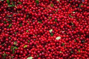 Arándano Rojo: propiedades y beneficios