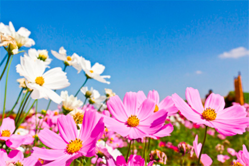 ¿Como pueden ayudar los nutrientes en primavera?