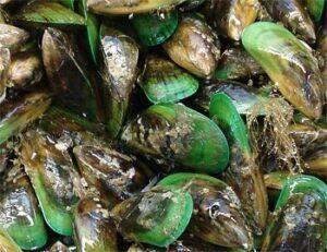 Inflamación y ácidos grasos esenciales: Krill, mejillón de labio verde