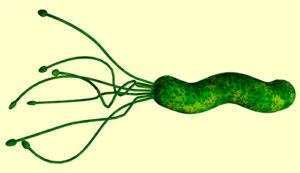 Helicobacter Pylori: tratamientos